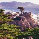 Lone Cypress Pebble Beach California