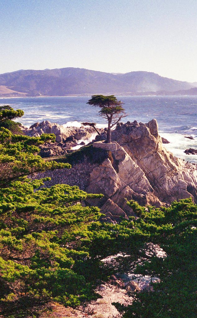 Lone Cypress Pebble Beach California