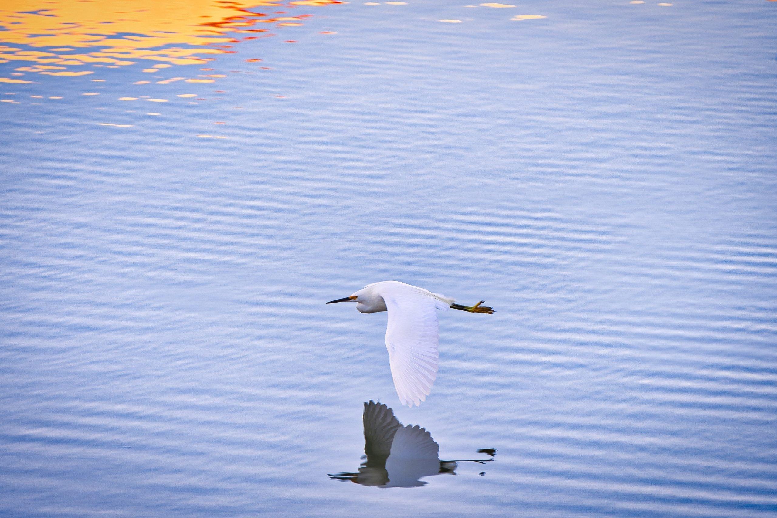seagull hilton head island